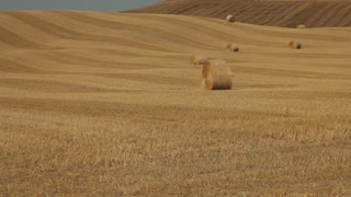 WS Harvested field with hay bales / Tuscany, Italy