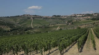 WS LD Rural Landscape with Vineyards / Tuscany, Italy