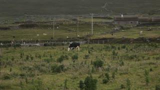 WS LD Rural Scene / Ireland