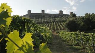 WS LD Vineyard / Tuscany, Italy