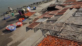 WS LD Women Laying Fish out on Beach to Dry / Hoi An, Vietnam