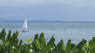 WS LS Sailboat gliding across ocean, plants in foreground / Indonesia