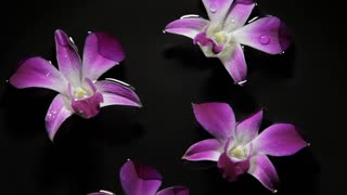 WS Orchids floating on water