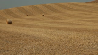 WS PAN Harvested field with hay bales / Tuscany, Italy