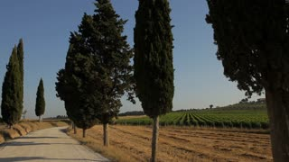 WS PAN Treelined country road / Tuscany, Italy