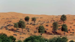 WS Sand dunes and trees in desert