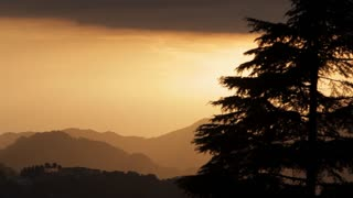 WS Silhouette of tree at sunset in foothills of Himalayan Mountains / India