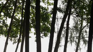 WS TD Woman in long white dress standing in forest / Singapore