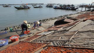 WS TD Women Laying Fish out on Beach to Dry / Hoi An, Vietnam