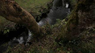 WS TU Small Stream in Forest / Ireland
