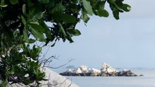 WS View of rocks in ocean with plants in foreground / Indonesia