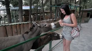 Beautiful Brunette Girl Feeding Donkey At Zoo. She Laughs And Wonders