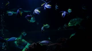 Big aquarium with sharks and several exotic fishes - 4K