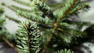 Family preparing for Christmas - Children's hands decorating a pine tree. - 4 k
