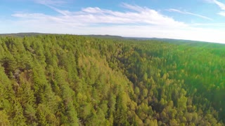 Camera flying high above large spruce tree forest