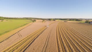 Flying over combine harvester at organic grainfield on a farm