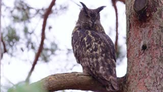 Large eagle owl sitting on a branch in a tree