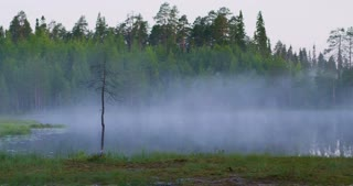 Beautiful foggy lake in lush finnish forest in the morning
