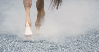 Close-up of horse hooves walking on sandy ground