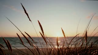A close-up of dry grass spice that are swaying in the wind with a beautiful pastel sunset at sea in the background
