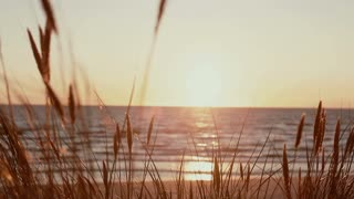 A close up of dry grass swaying in the wind with a beautiful pink sunset at the sea in the background