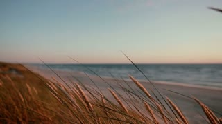 A close up of dry grass swaying in the wind with a view of a beautiful pink and blue sunset at sea in the background