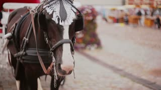 A close-up of horse harnessed to a beautiful festive carriage that is standing on a cobbled square.