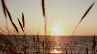 A view of a gorgeous pink sunset at sea with dry grass stems swaying in the wind in the front view