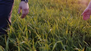 Close-up of lovers taking each other by the hand. Man and woman walk in long grass, hold hands. Slow mo, steadicam shot.