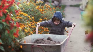 Cute little boy driving the wheelbarrow in the the garden through the flower. Male try to move cart, working outdoor. 4K