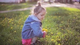 Cute pretty girl making bouquet of dandelions on a sunny day. Beautiful little lady choosing best flowers.