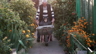 Grandfather with grand son working in the garden riding the wheelbarrow. Old man helping little boy outdoor. 4K
