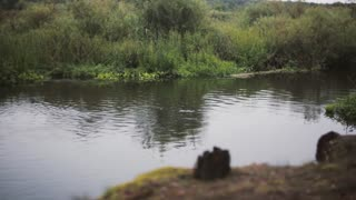 Having rest in the nature. Young brave man jumping into water in the nature, swimming. Bushes and ling grass around