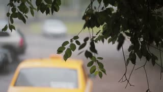 Rain Pours Down On Branches Of A Tree Blurred Cars On The