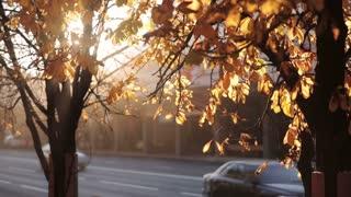 rays of sun shines through autumn leaves.