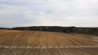 Aerial view of the field after harvesting. Countryside landscape. Brown land without plant, forest on the background.