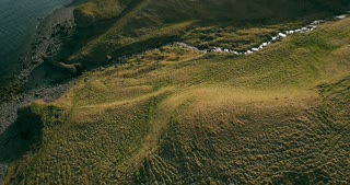 Aerial view of the wild mountains river flows in the valley. Copter flying over the green fields in Iceland.