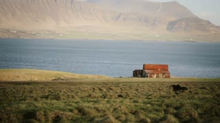 Beautiful view of North nature. The herd of wild icelandic horses running in gallop through the field near the old house