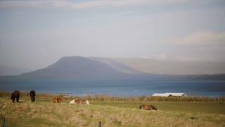 Beautiful view of the animals farm on the nature. Wild Icelandic horse eating grass, grazing on the field.