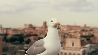 Close-up view of white little seagull looking around. Against the background of the old city roofs.