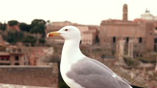 Close-up view of white seagull sitting on roof top and looking around. Bird fly away against the background of old city.