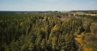 Drone aerial shot of early springtime wild forest. 4K flyover view of sunny mixed forest trees, small river countryside.