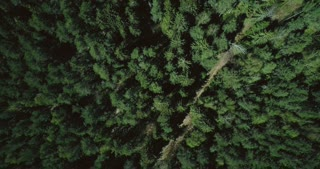 Drone ascending and rotating over forest road. Aerial 4K vertical zoom out background shot of quiet evergreen pattern.