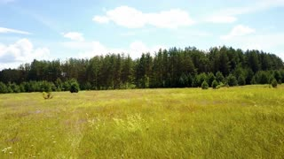 Drone flying fast forward, rising above lush meadow. Aerial shot of summer field and evergreen forest. Treetops. 4K.