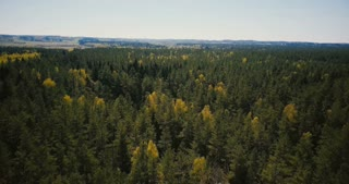 Drone flying fast over beautiful wide forest view. Aerial 4K fantastic background shot of trees and opening skyline.