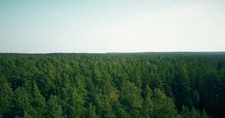 Drone flying forward and up over windy forest. Aerial 4K opening perspective of summer light green trees and horizon.