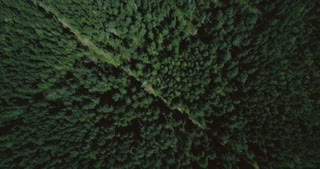 Drone flying forward high above lush green forest. Aerial 4K topview vertical shot of evergreen trees and lonely trail.