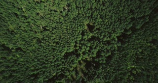 Drone flying forward high above mixed forest. Aerial 4K topview vertical shot of peaceful fall trees and small path.