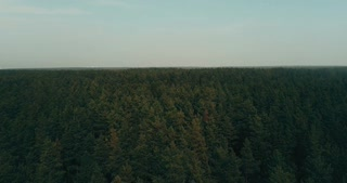 Drone flying forward over evergreen forest. Aerial 4K flyover topview shot of dramatic dark green lush treetops.
