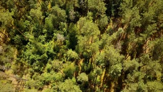 Drone flying forward over sunny green forest. Aerial flyover shot of warm summer mixed treetops texture. Topview 4K.